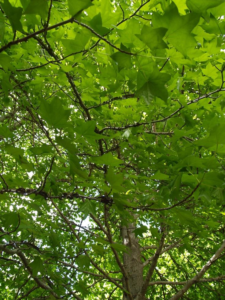 Spring Growth 2006