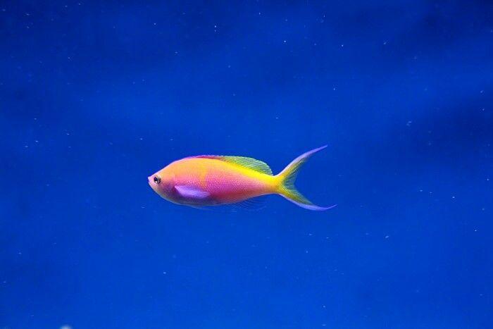 Beautiful fish from Sea Life Helsinki, Finland