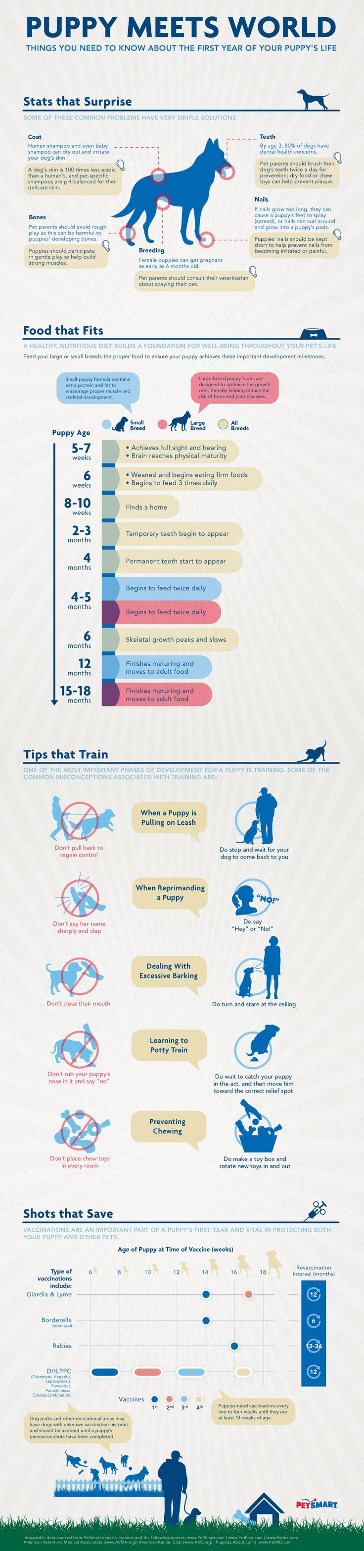 Understanding Your Puppy's Needs: Infographic - great puppy training tips! #puppytraining
