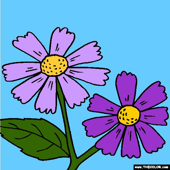 helenium flower coloring page sneezeweed