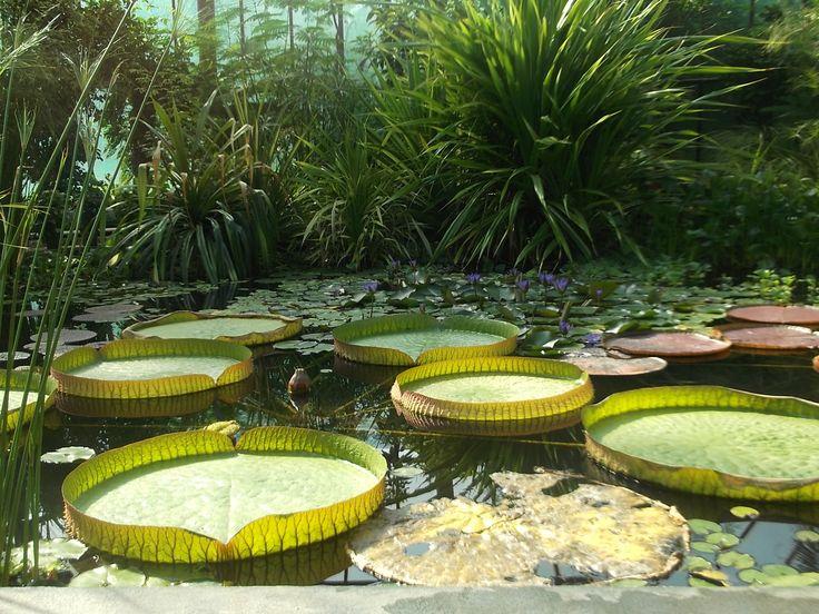 János Tuzson Botanical Garden Nyíregyháza