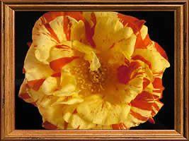 Oranges and Lemons (PBR)