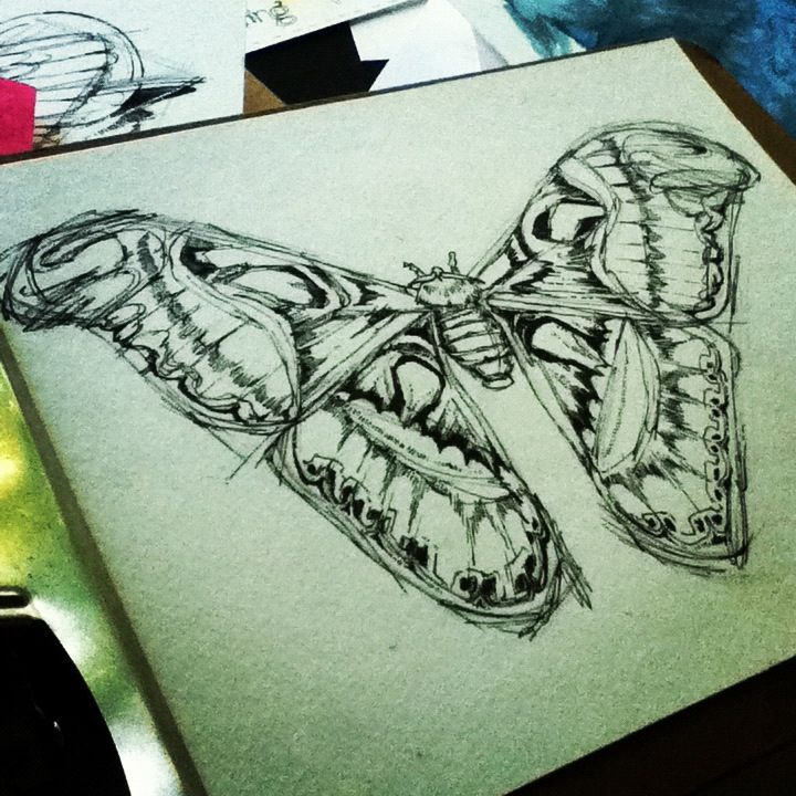 Atlas Moth in sketch phase...