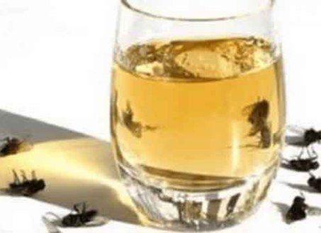 Spray Dit in Jouw Huis En Er Zullen Geen Muggen, Kakkerlakken en Vliegen Meer Zijn In Slechts 2 uur