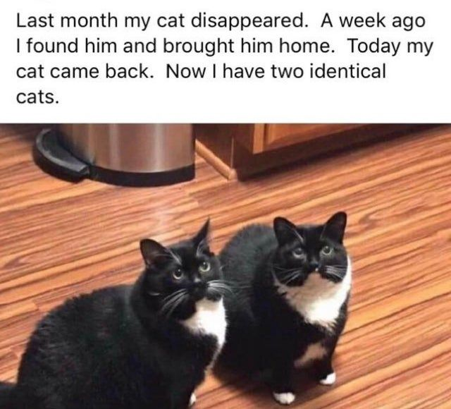 57 Funny Memes From Last Week Keeping Us From Going Insane Gallery Cats Bad Cats Funny Cats