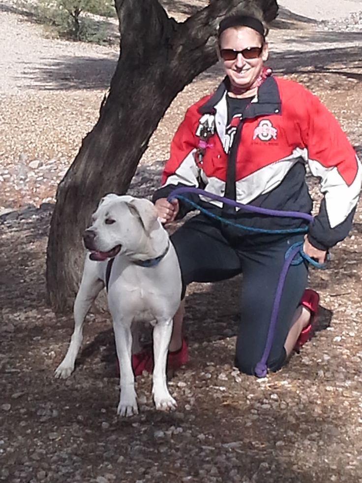 Boxer dog for Adoption in Chandler, AZ. ADN423789 on