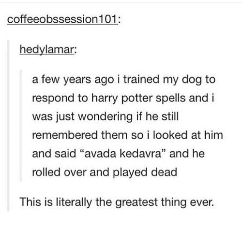 Harry Potter dog tricks.