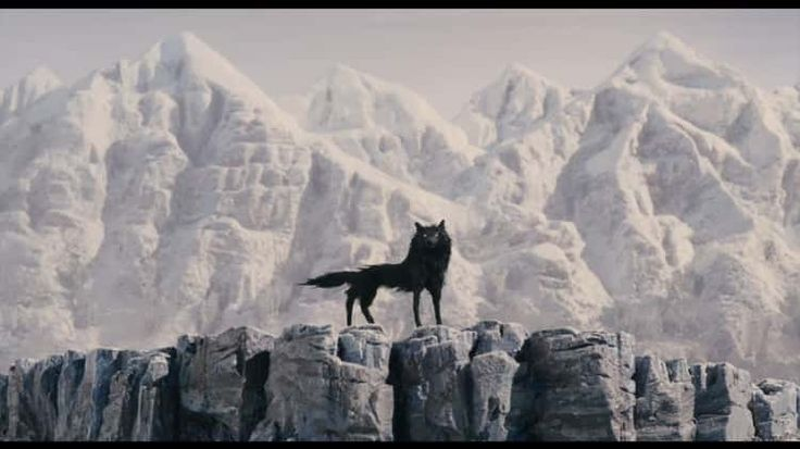 Estudo de cena: O Fantástico Sr. Raposo e o simbolismo do lobo
