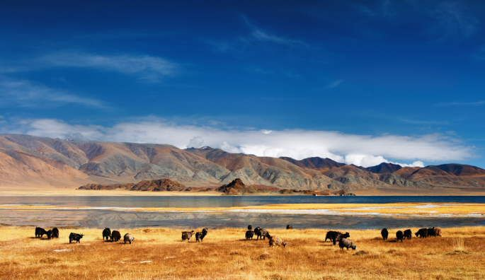voyage trek mongolie
