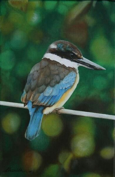 Kotare - NZ native kingfisher, oil painting on canvas - by Cherith Curtis