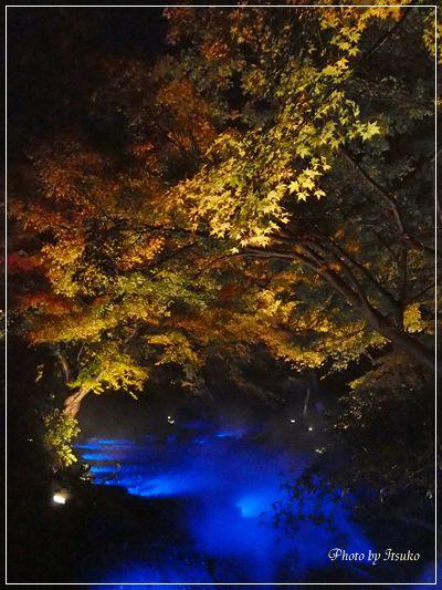 六義園ライトアップ④ | 美濃太田駅徒歩5分・地域に愛され15年のフラワー教室