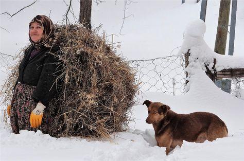 Ot taşıyan kadın ve köpeği / Ot taşıyan kadın ve köpeği