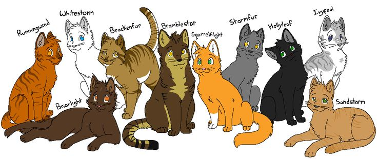 1000 Images About Squirrelflight On Pinterest Cats Don