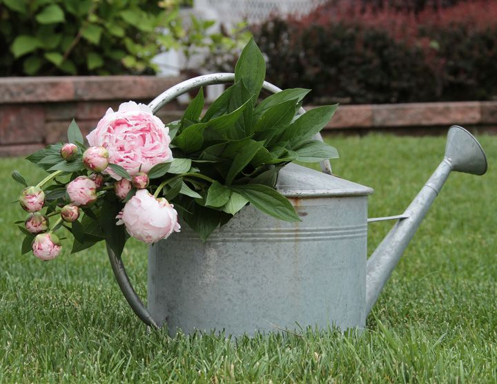 video how to cut peonies - How To Cut Peonies