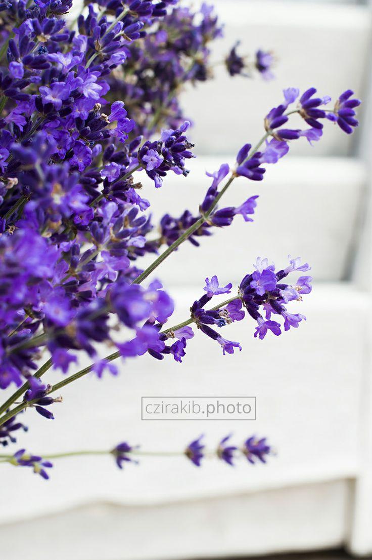 levendula | lavender czirakib.photo