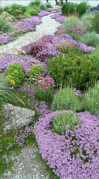 mediterranean plants love stone and gravel mulch
