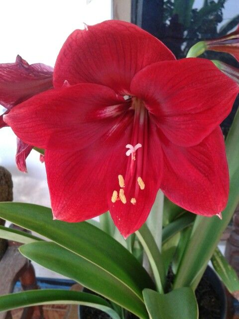#flower #red