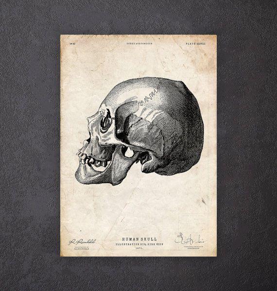 Eng decor menselijke schedel kunst afdrukken door CodexAnatomicus