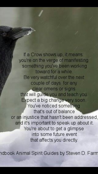 The meaning of crow showing up                                                                                                                                                     More