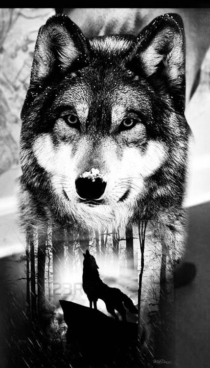 63f7d32a283be Black white wolf howling with enlarged wolf face | Art | Wolf ...