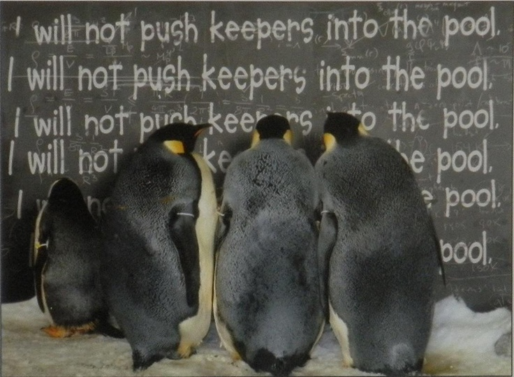One of the super funny photo hanging up behind the scenes at SeaWorld's Penguin Encounter in SeaWorld