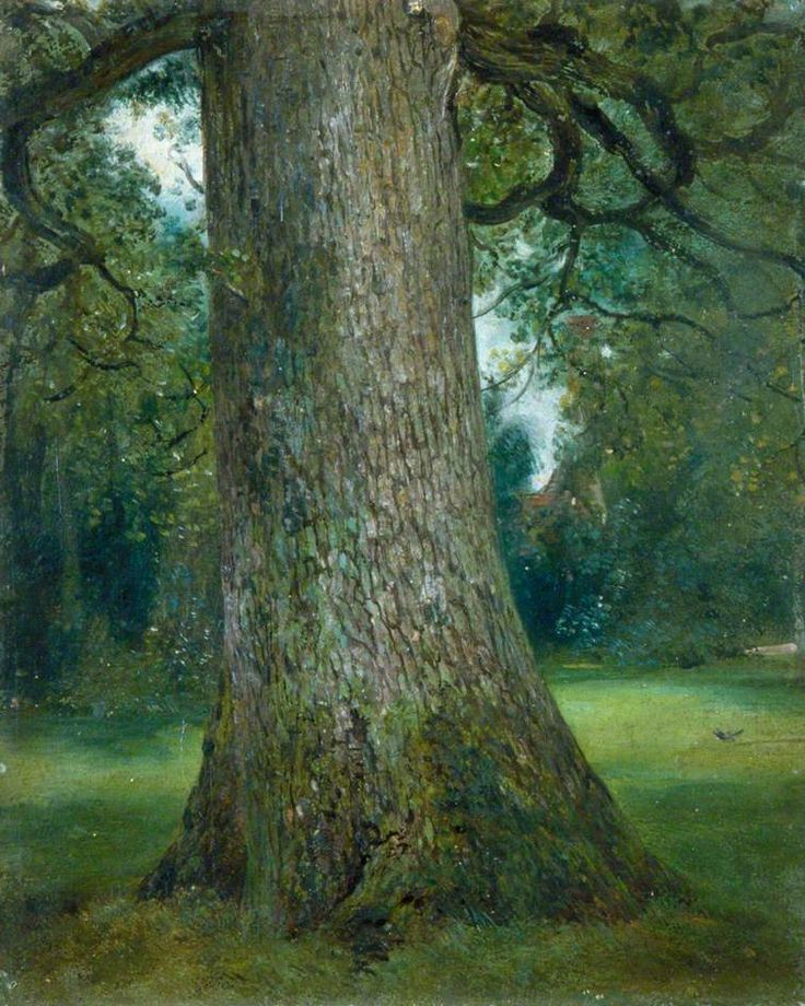 Study of the Trunk of an Elm Tree (John Constable)