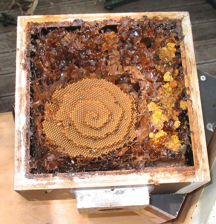 An OATH hive during a split showing the brood spiral and honey and pollen stores