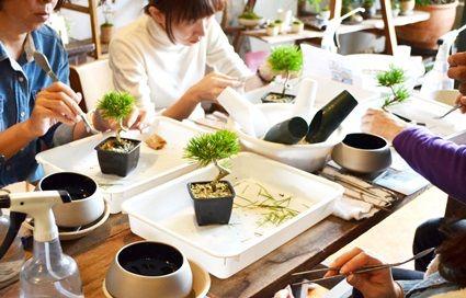 黒松盆栽ワークショップ風景 : Kitowaの日々