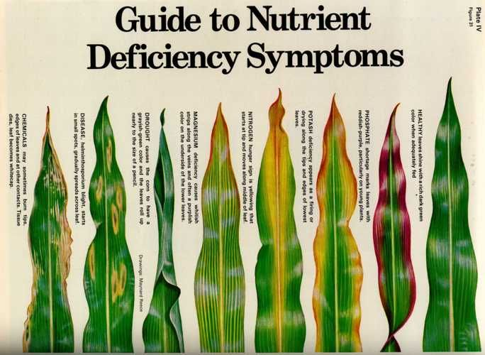 This chart outlines various nutrient stress conditions many plants face. the direct symptoms are also shown as a condition of leaf damage. The symptoms can often help identify which nutrient is causing the stress. nutrient stress can be caused by both too little or too much of micro or macronutrients.                                                                                                                                                                                 Mais