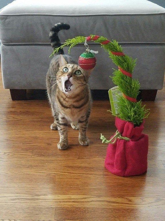 <p>Wenn es am Weihnachtsbaum so richtig schön glitzert und wackelt, sind Stubentiger immer sofort zur Stelle. Alle Jahre wieder fällt dann mancher Baum dem Spieltrieb von Hauskatzen zum Opfer. Viele Tierliebhaber entscheiden sich dann für eine eher schlichte Variante, wie links im Bild. Ob das Bäumchen Weihnachten überleben wird – was meinen Sie? (Bild: icanhascheezburger.com)</p>