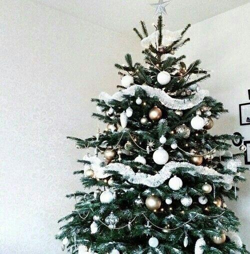 christmas, tree, and christmas tree-bilde