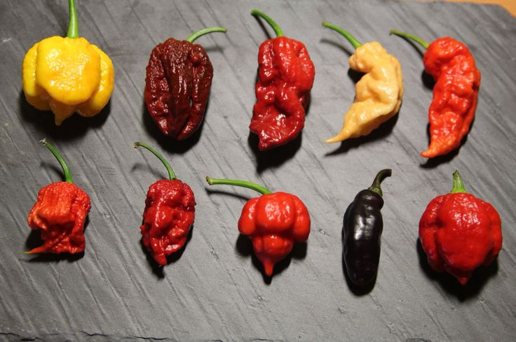 To each his own #peppers #PeperonciniPiccanti #hotpeppers #peperoncino www.peperoncinipiccanti.com