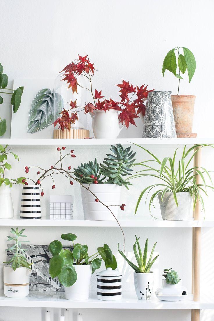 S i n n e n r a u s c h urban jungle bloggers plantshelfie indoor gardening house plants - Beautiful house plants ...