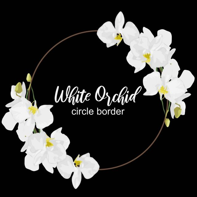 Floral White Orchid Flower Circle Border Frame Circle Orchid Png And Vector With Transparent Background For Free Download Flower Circle Orchid Flower Orchids