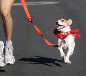 Running With Your Dog: How to Train Fido to Run at Your Side... Not quite ready for this but GREAT advice!