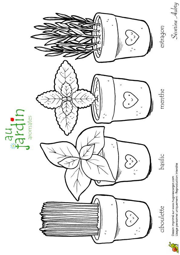 Coloriage Découverte Les Aromates Du Jardin - Hugolescargot.com