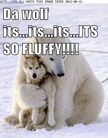 funny animal pictures with captions | funny-animal-captions-animal-capshunz-swept-me-off-my-feet.jpg