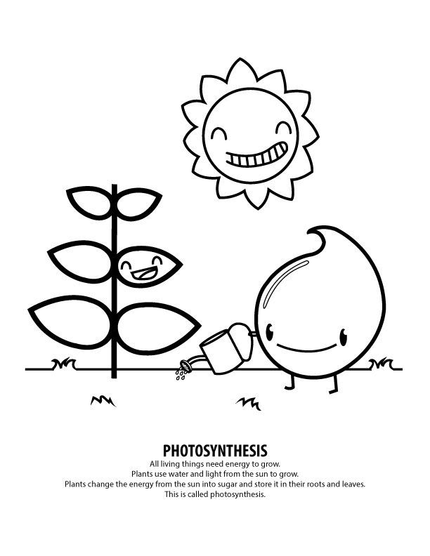 Photosynthesis Coloring Pages Coloring Pages For Girls Di 2020