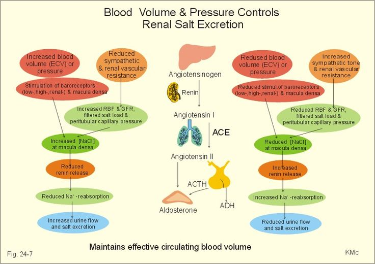 does music affect blood pressure essay Effects of music tempos on blood pressure, heart rate, and skin conductance after physical exertion university of wisconsin – madison lab 601, group 10: robyn armon.