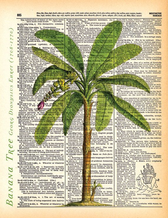 Banana tree, palm tree, dictionary print, Vintage Botanical Illustration, Printed on an 8x11 Antique Dictionary Page.