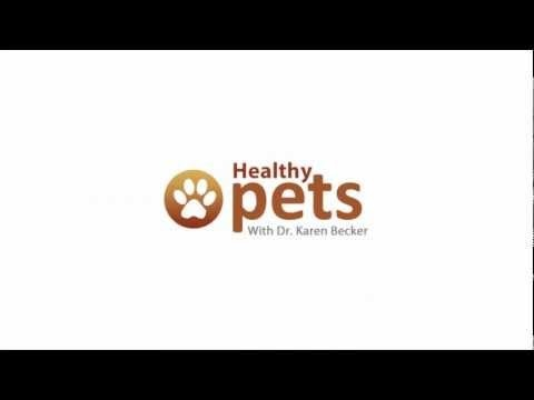 Pneumonia in Pets - Dr. Becker on Bacterial and Fungal Pneumonia
