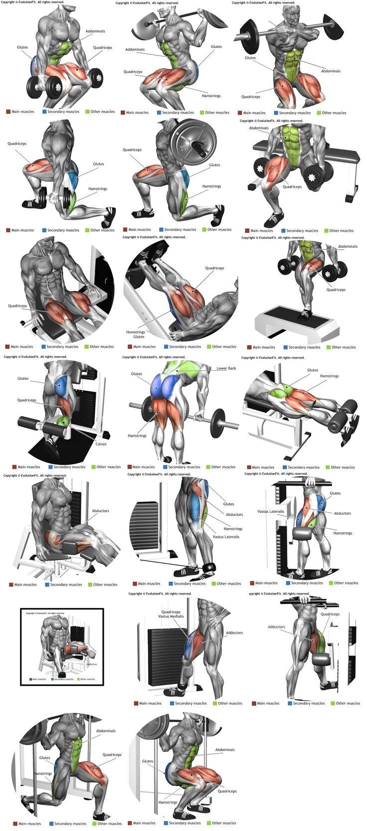 Pierna ( quadríceps, bíceps femural, adutor e abdutor)