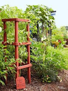 DIY+Tomato+Cage+Ideas
