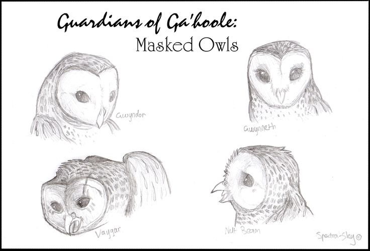 Masked+Owls+of+Ga'hoole+by+Spectra-Sky.deviantart.com+on+@DeviantArt