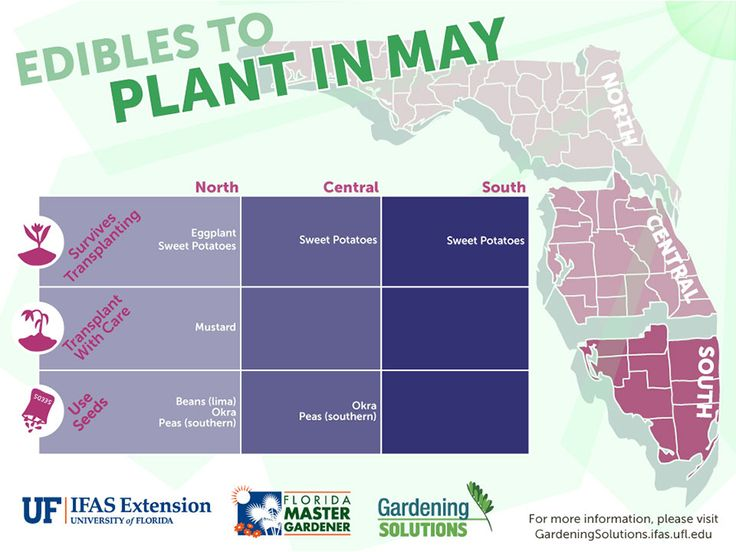 A graphic showing vegetables to plant in May for Florida