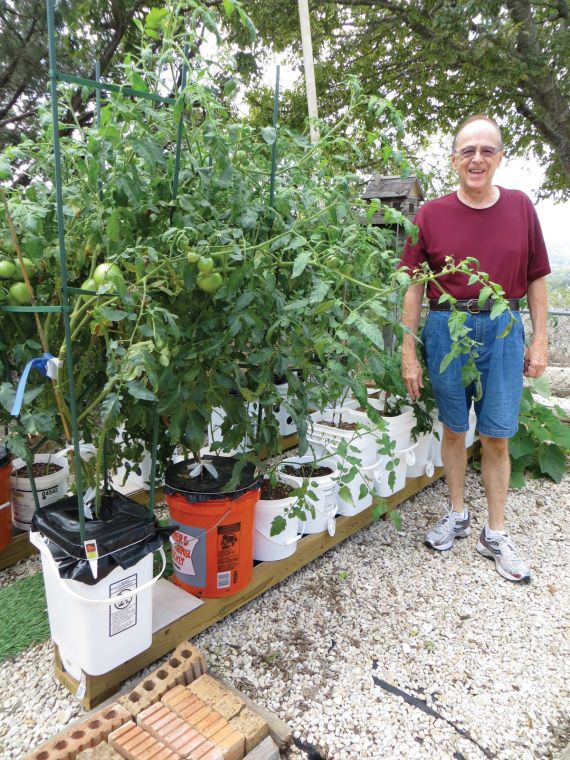 how to get rid of creeping charlie in vegetable garden