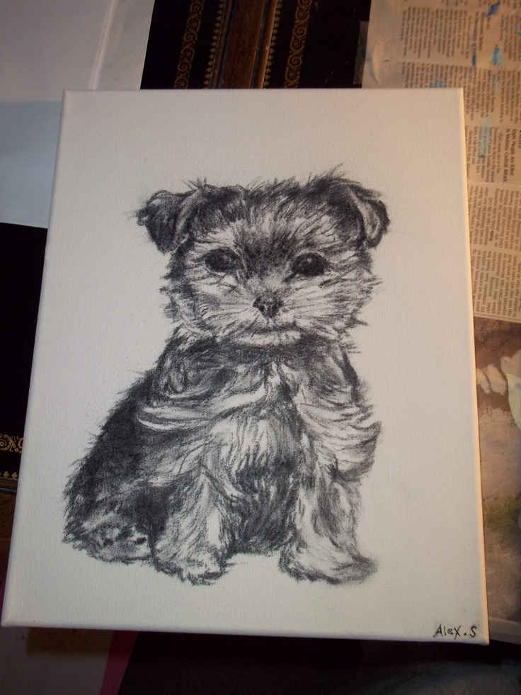 Yorkie puppy, original drawing by me, Alex Stamper. Want me to draw your pet?
