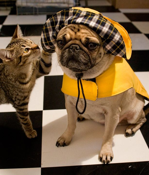 """Shut up, cat. Just shut up"" (via ShutterPug)"