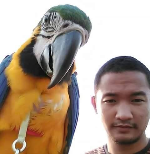 Foto kiriman Robby Afrian  Burung warna warni karna ada cat Emco PAint..heheee  #AnimalLoversEMCO