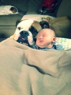 New Baby and a New Friend #english #bulldog #englishbulldog #bulldogs #breed #dogs #pets #animals #dog #canine #pooch #bully #doggy #love #friends #friendship